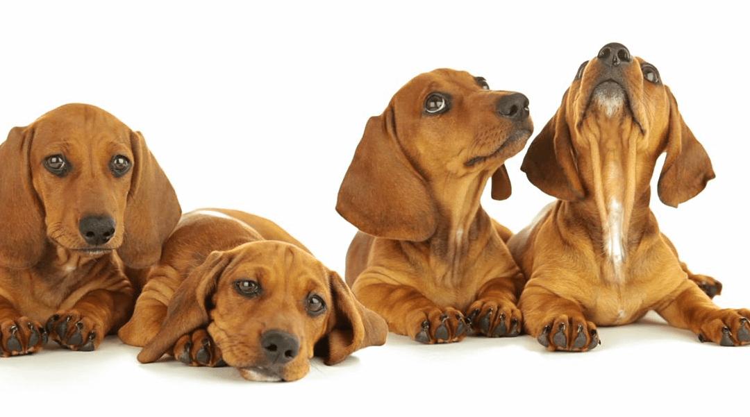 Tailtalk: ¿qué dice tu perro al mover la cola?